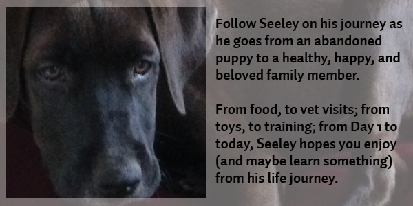 Meet Seeley and follow him on his journey  from abandoned puppy to a happy, healthy, and beloved family member.